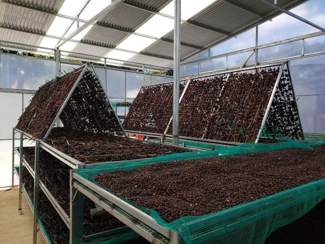 Chàng trai 9X và những người bạn nông dân trên hành trình nâng cao giá trị cà phê Việt Nam - Ảnh 6.