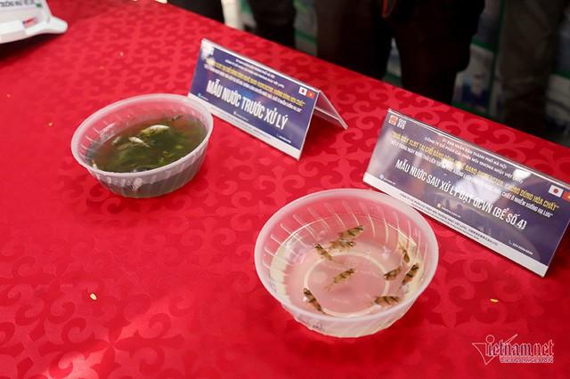 Đàn cá Koi Nhật Bản bơi tung tăng trên sông Tô Lịch ngày nắng nóng - Ảnh 2.