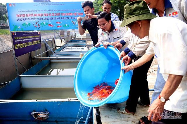 Đàn cá Koi Nhật Bản bơi tung tăng trên sông Tô Lịch ngày nắng nóng - Ảnh 13.