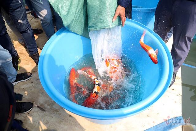 Đàn cá Koi Nhật Bản bơi tung tăng trên sông Tô Lịch ngày nắng nóng - Ảnh 6.