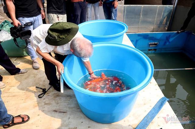 Đàn cá Koi Nhật Bản bơi tung tăng trên sông Tô Lịch ngày nắng nóng - Ảnh 8.