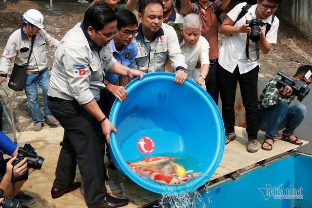 Đàn cá Koi Nhật Bản bơi tung tăng trên sông Tô Lịch ngày nắng nóng - Ảnh 10.