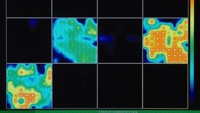 Nuôi hàng trăm bộ não thu nhỏ trong ống nghiệm, các nhà khoa học phát hiện chúng có sóng não như trẻ sơ sinh - Ảnh 2.