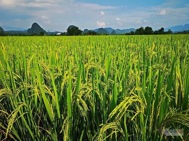 Cảnh sắc đẹp nhất thế giới mỗi năm 1 lần chỉ có ở Việt Nam - Ảnh 13.