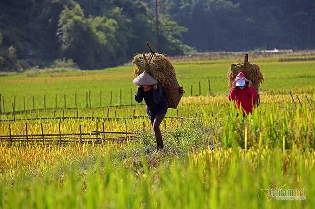 Cảnh sắc đẹp nhất thế giới mỗi năm 1 lần chỉ có ở Việt Nam - Ảnh 18.