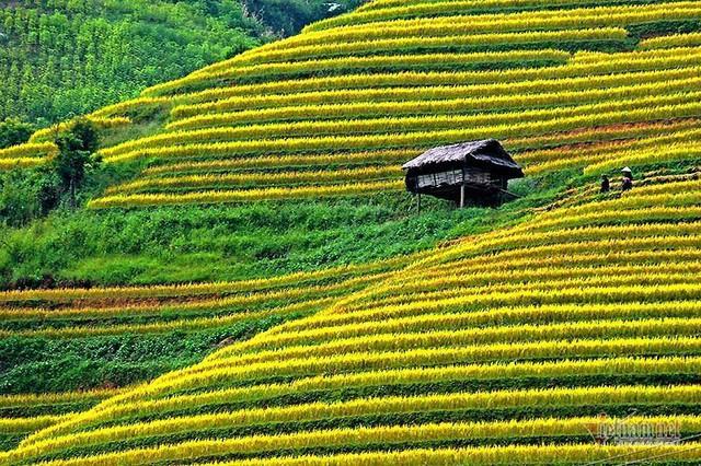 Cảnh sắc đẹp nhất thế giới mỗi năm 1 lần chỉ có ở Việt Nam - Ảnh 7.