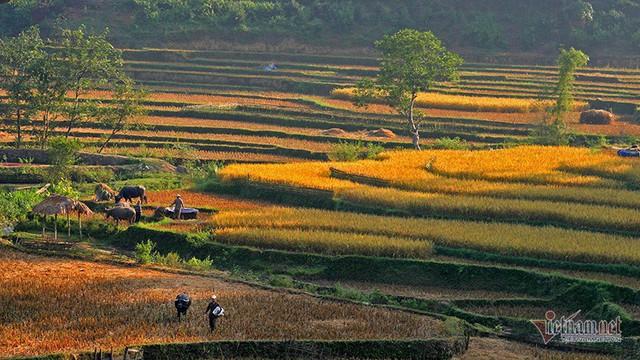 Cảnh sắc đẹp nhất thế giới mỗi năm 1 lần chỉ có ở Việt Nam - Ảnh 8.