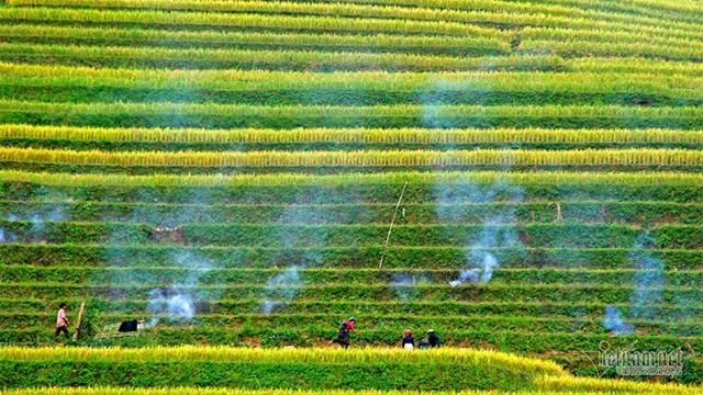 Cảnh sắc đẹp nhất thế giới mỗi năm 1 lần chỉ có ở Việt Nam - Ảnh 10.