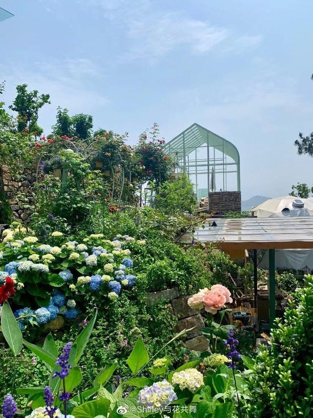 Người phụ nữ 40 tuổi nghỉ hưu sớm, dùng tiền dành dụm cả đời để đổi lấy khu vườn rực rỡ như thiên đường trên đồi hướng biển - Ảnh 12.