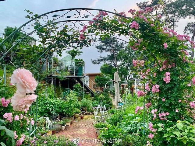 Người phụ nữ 40 tuổi nghỉ hưu sớm, dùng tiền dành dụm cả đời để đổi lấy khu vườn rực rỡ như thiên đường trên đồi hướng biển - Ảnh 3.