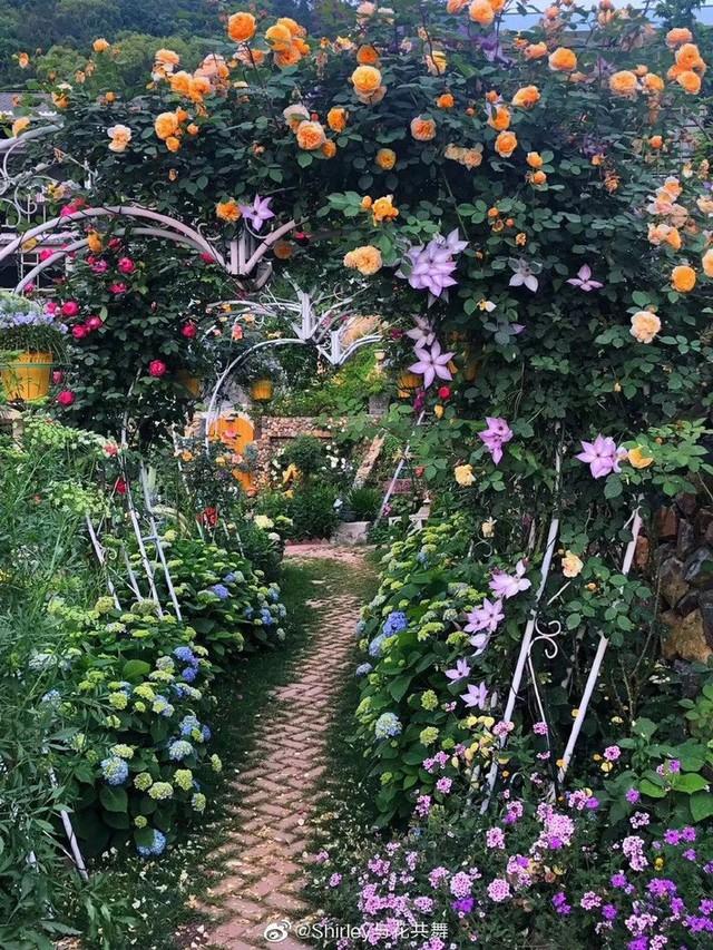 Người phụ nữ 40 tuổi nghỉ hưu sớm, dùng tiền dành dụm cả đời để đổi lấy khu vườn rực rỡ như thiên đường trên đồi hướng biển - Ảnh 6.