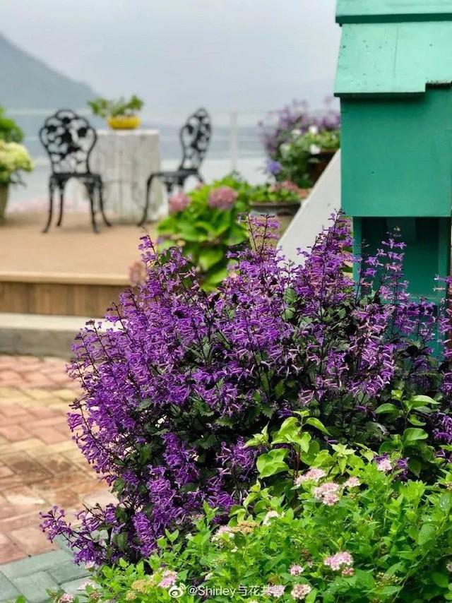 Người phụ nữ 40 tuổi nghỉ hưu sớm, dùng tiền dành dụm cả đời để đổi lấy khu vườn rực rỡ như thiên đường trên đồi hướng biển - Ảnh 7.