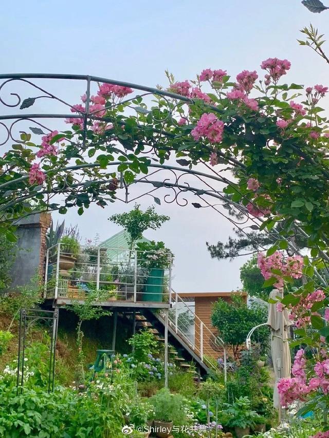 Người phụ nữ 40 tuổi nghỉ hưu sớm, dùng tiền dành dụm cả đời để đổi lấy khu vườn rực rỡ như thiên đường trên đồi hướng biển - Ảnh 8.