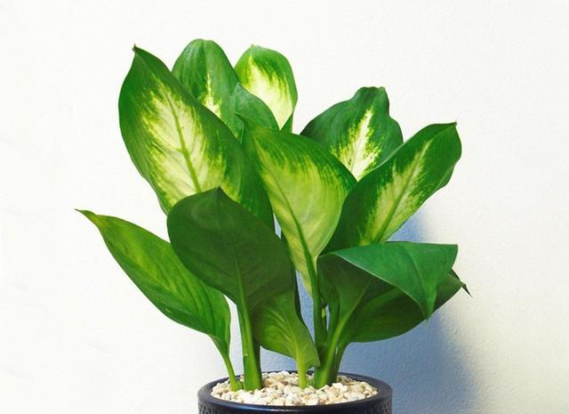 Bạn khỏi cần sợ không khí ô nhiễm khi biết trồng 1 trong 15 loại cây này trong nhà - Ảnh 13.