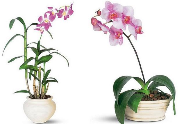 Bạn khỏi cần sợ không khí ô nhiễm khi biết trồng 1 trong 15 loại cây này trong nhà - Ảnh 4.