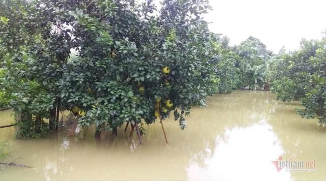 Mưa lớn suốt 2 ngày, thủy điện xả lũ, hàng trăm dân Hà Tĩnh bị cô lập - Ảnh 7.
