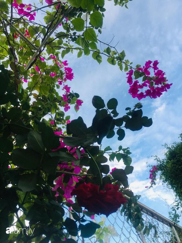 Khu vườn 30m² muôn hoa đua nở trên sân thượng của bà mẹ 3 con ở TP. HCM - Ảnh 2.