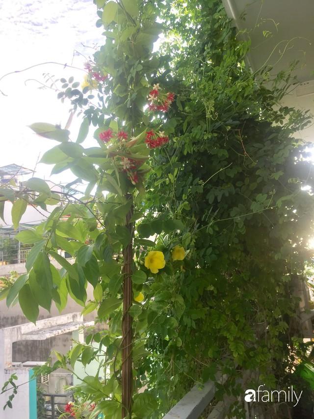Khu vườn 30m² muôn hoa đua nở trên sân thượng của bà mẹ 3 con ở TP. HCM - Ảnh 13.