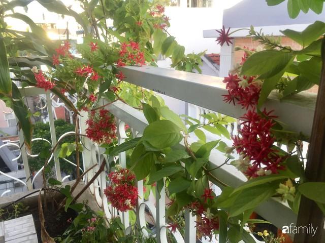 Khu vườn 30m² muôn hoa đua nở trên sân thượng của bà mẹ 3 con ở TP. HCM - Ảnh 14.