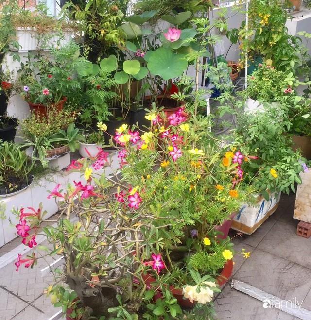 Khu vườn 30m² muôn hoa đua nở trên sân thượng của bà mẹ 3 con ở TP. HCM - Ảnh 15.
