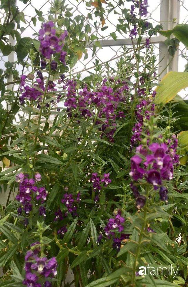 Khu vườn 30m² muôn hoa đua nở trên sân thượng của bà mẹ 3 con ở TP. HCM - Ảnh 18.