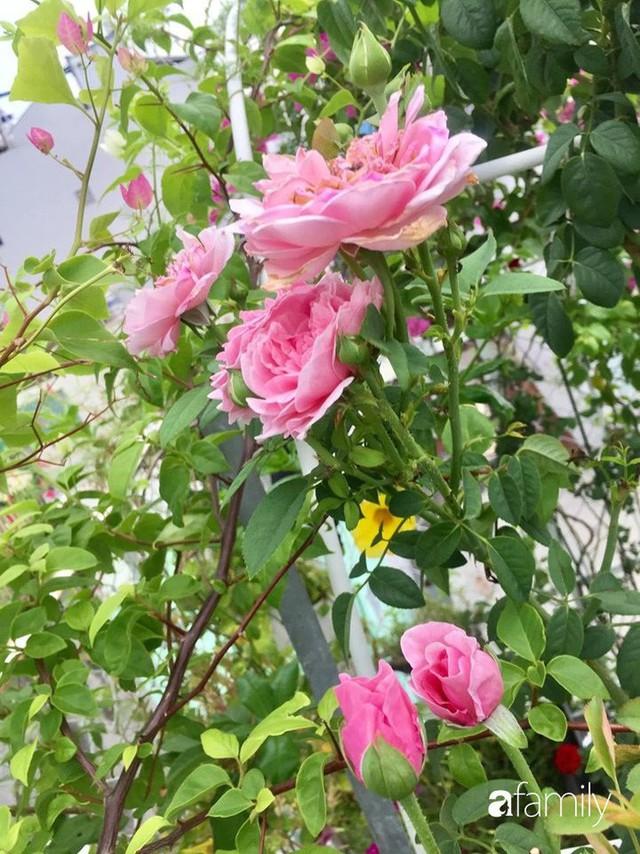 Khu vườn 30m² muôn hoa đua nở trên sân thượng của bà mẹ 3 con ở TP. HCM - Ảnh 19.