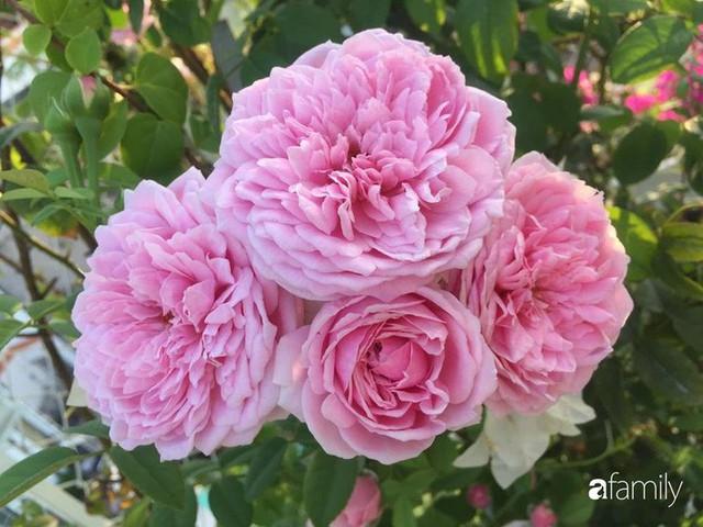 Khu vườn 30m² muôn hoa đua nở trên sân thượng của bà mẹ 3 con ở TP. HCM - Ảnh 20.