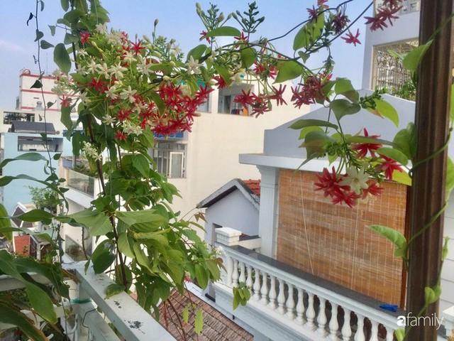 Khu vườn 30m² muôn hoa đua nở trên sân thượng của bà mẹ 3 con ở TP. HCM - Ảnh 3.