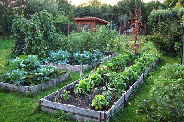 Khu vườn 100 năm vẫn xanh tươi, ngập tràn rau trái nhờ có sự vun đắp của nhiều thế hệ - Ảnh 3.