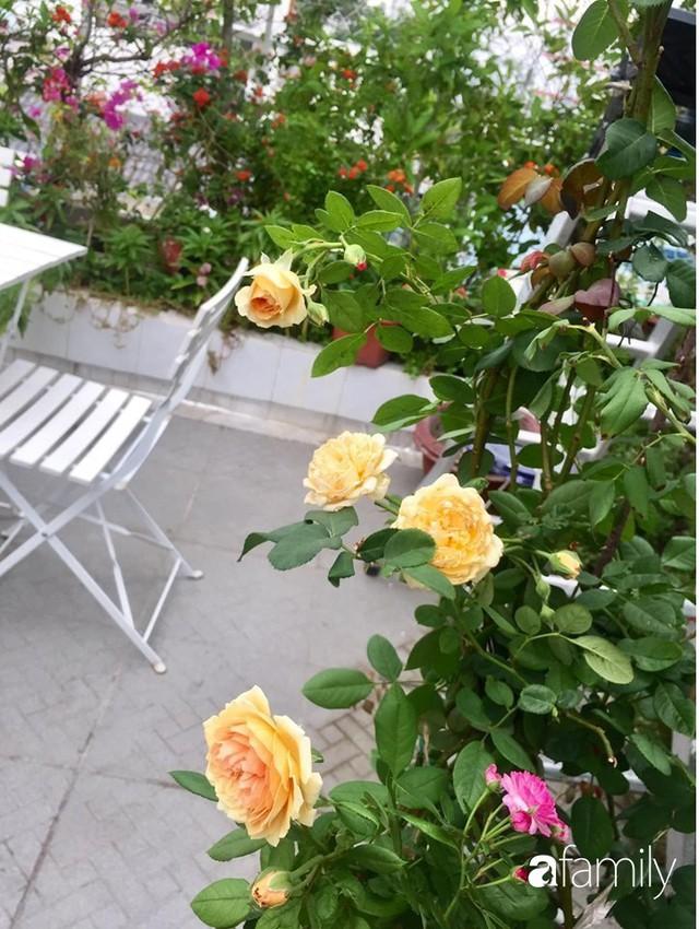 Khu vườn 30m² muôn hoa đua nở trên sân thượng của bà mẹ 3 con ở TP. HCM - Ảnh 21.