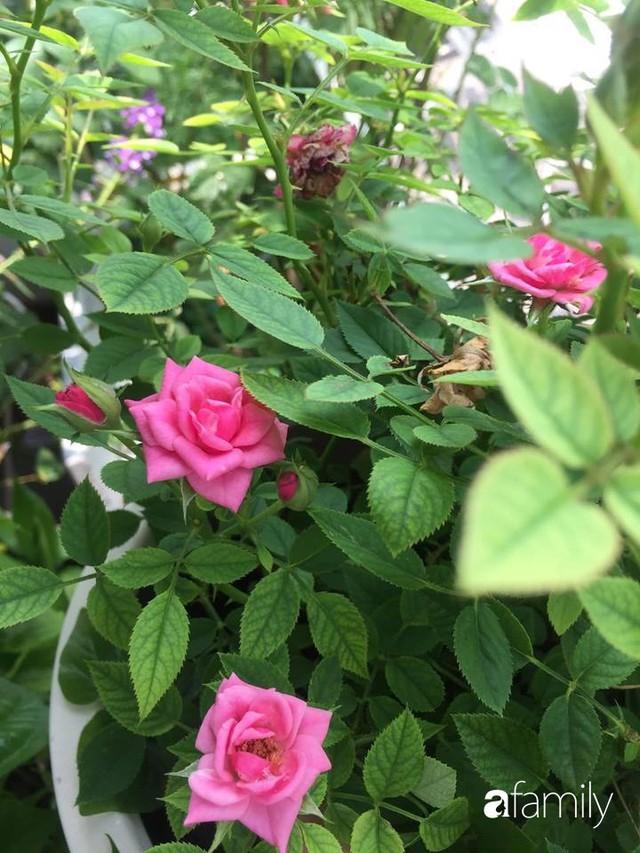 Khu vườn 30m² muôn hoa đua nở trên sân thượng của bà mẹ 3 con ở TP. HCM - Ảnh 23.