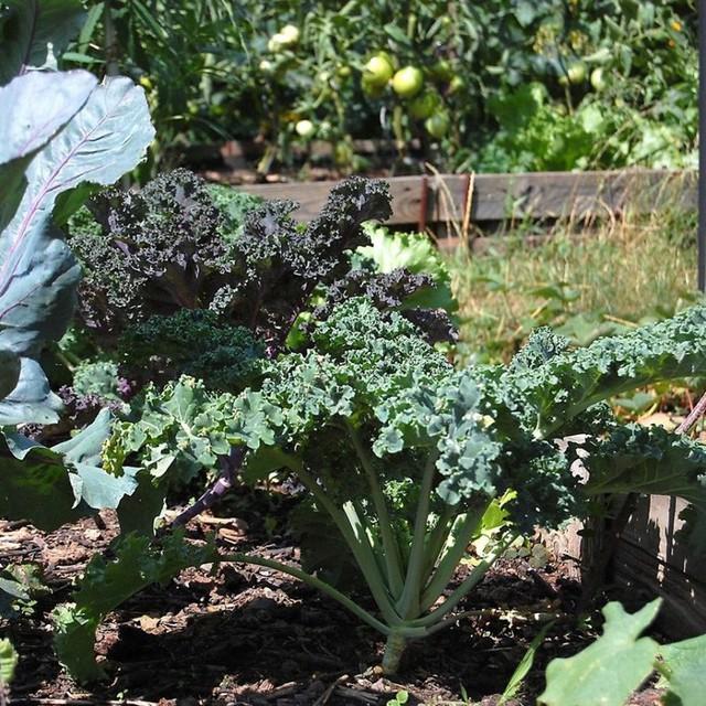 Khu vườn 100 năm vẫn xanh tươi, ngập tràn rau trái nhờ có sự vun đắp của nhiều thế hệ - Ảnh 23.