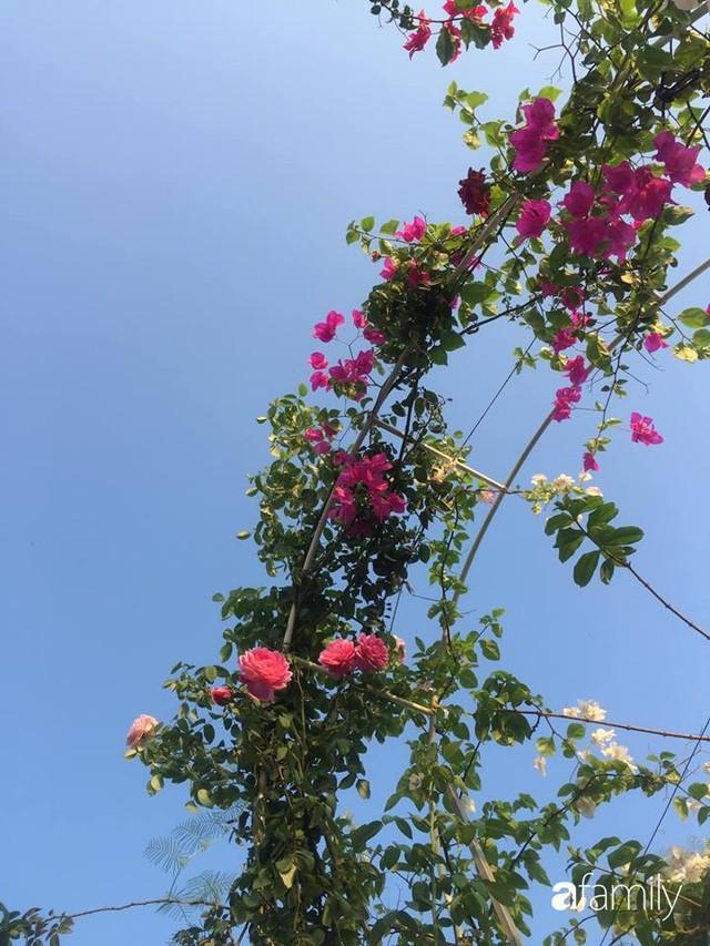 Khu vườn 30m² muôn hoa đua nở trên sân thượng của bà mẹ 3 con ở TP. HCM - Ảnh 24.
