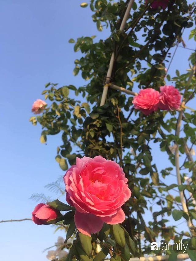 Khu vườn 30m² muôn hoa đua nở trên sân thượng của bà mẹ 3 con ở TP. HCM - Ảnh 25.