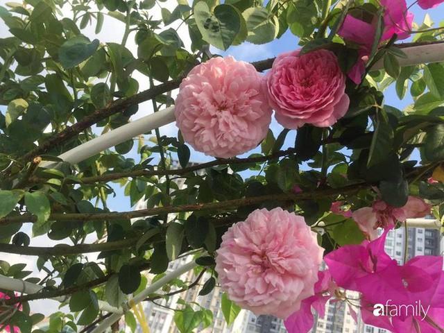 Khu vườn 30m² muôn hoa đua nở trên sân thượng của bà mẹ 3 con ở TP. HCM - Ảnh 27.