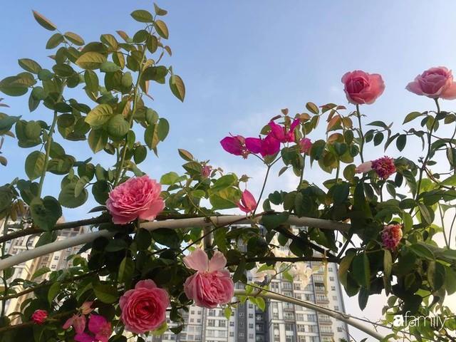 Khu vườn 30m² muôn hoa đua nở trên sân thượng của bà mẹ 3 con ở TP. HCM - Ảnh 29.