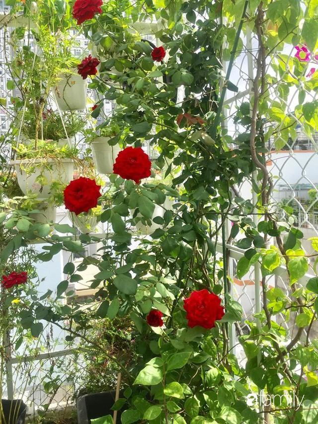 Khu vườn 30m² muôn hoa đua nở trên sân thượng của bà mẹ 3 con ở TP. HCM - Ảnh 4.