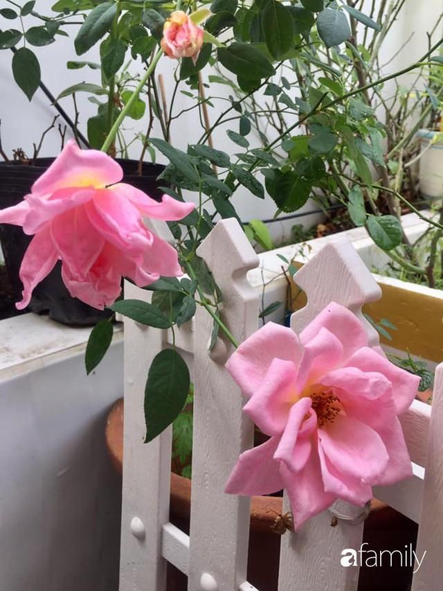 Khu vườn 30m² muôn hoa đua nở trên sân thượng của bà mẹ 3 con ở TP. HCM - Ảnh 31.