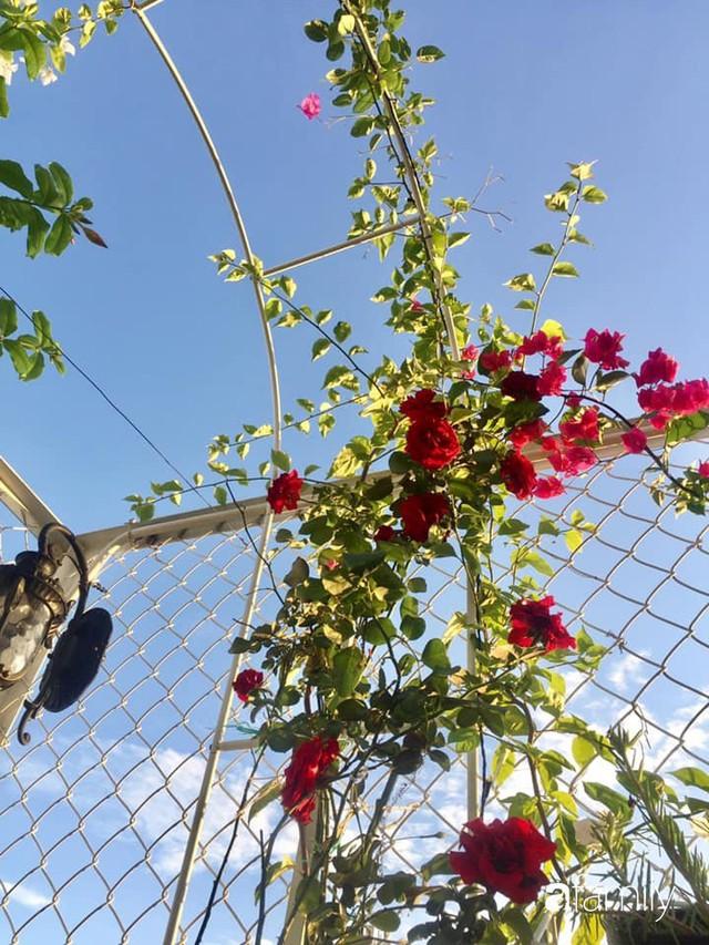 Khu vườn 30m² muôn hoa đua nở trên sân thượng của bà mẹ 3 con ở TP. HCM - Ảnh 32.