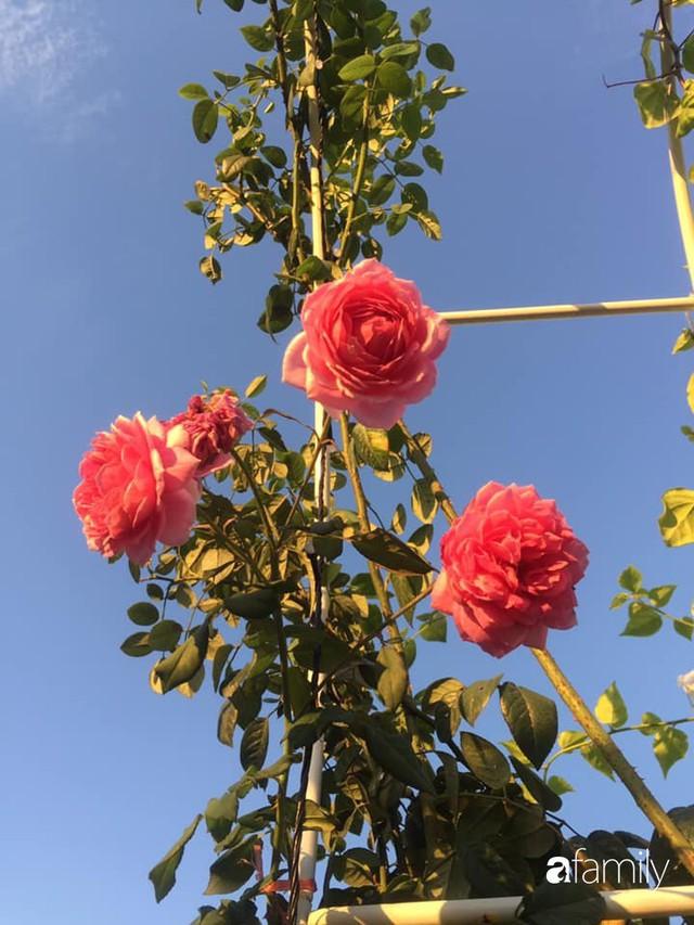 Khu vườn 30m² muôn hoa đua nở trên sân thượng của bà mẹ 3 con ở TP. HCM - Ảnh 33.