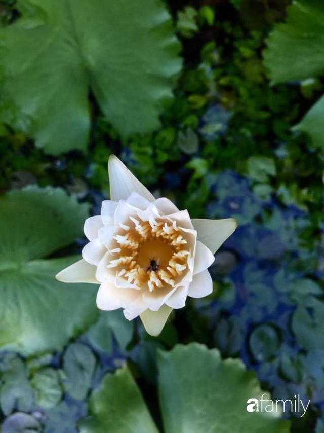 Khu vườn 30m² muôn hoa đua nở trên sân thượng của bà mẹ 3 con ở TP. HCM - Ảnh 35.