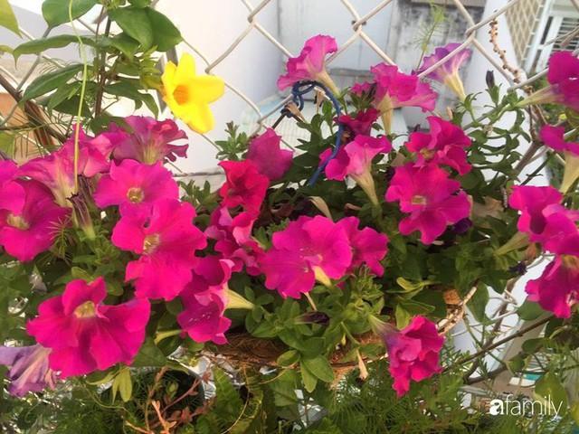 Khu vườn 30m² muôn hoa đua nở trên sân thượng của bà mẹ 3 con ở TP. HCM - Ảnh 7.