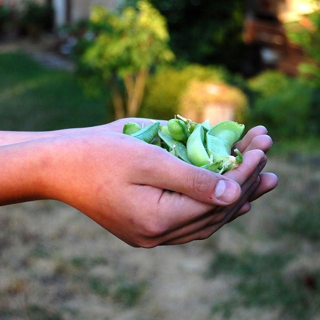 Khu vườn 100 năm vẫn xanh tươi, ngập tràn rau trái nhờ có sự vun đắp của nhiều thế hệ - Ảnh 7.