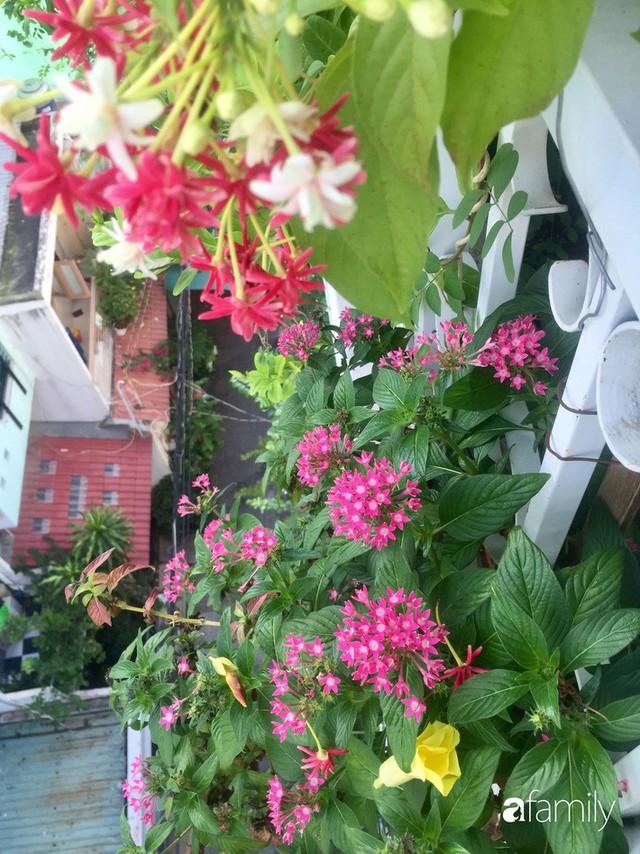 Khu vườn 30m² muôn hoa đua nở trên sân thượng của bà mẹ 3 con ở TP. HCM - Ảnh 8.