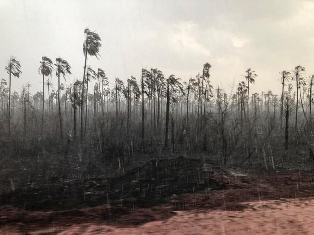 Tù trưởng bản địa gần rừng Amazon và thông điệp cay đắng: Rồi các anh sẽ chìm trong sợ hãi, như cảm giác chúng tôi đang trải qua lúc này - Ảnh 1.