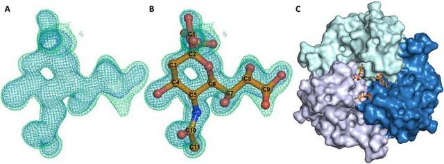 Các nhà khoa học vừa crack được mã code một virus đặc biệt, từ đó họ sẽ tạo ra vắc-xin chống ung thư - Ảnh 2.