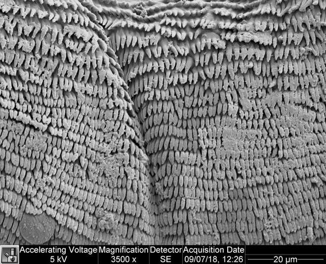 Vật lý trong thế giới động thực vật: Ấu trùng nhảy cao, tôm bọ ngựa đấm vỡ bể kính và cây phỉ Tàu nhổ hạt như đạn bắn - Ảnh 5.