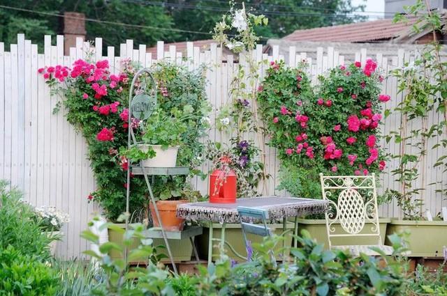 Cô gái trẻ bỏ ra 1,3 tỷ đồng cải tạo đất, mua giống hoa, biến sân nhà thành khu vườn đẹp lung linh - Ảnh 14.