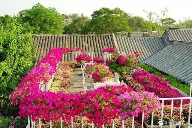 Cô gái trẻ bỏ ra 1,3 tỷ đồng cải tạo đất, mua giống hoa, biến sân nhà thành khu vườn đẹp lung linh  - Ảnh 22.
