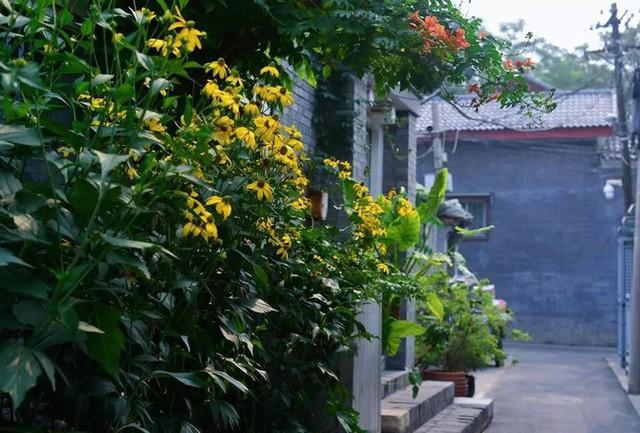 Cô gái trẻ bỏ ra 1,3 tỷ đồng cải tạo đất, mua giống hoa, biến sân nhà thành khu vườn đẹp lung linh - Ảnh 6.